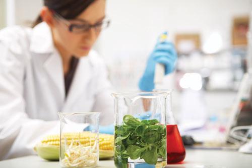 lab_food