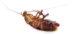 cockroach-killed-small