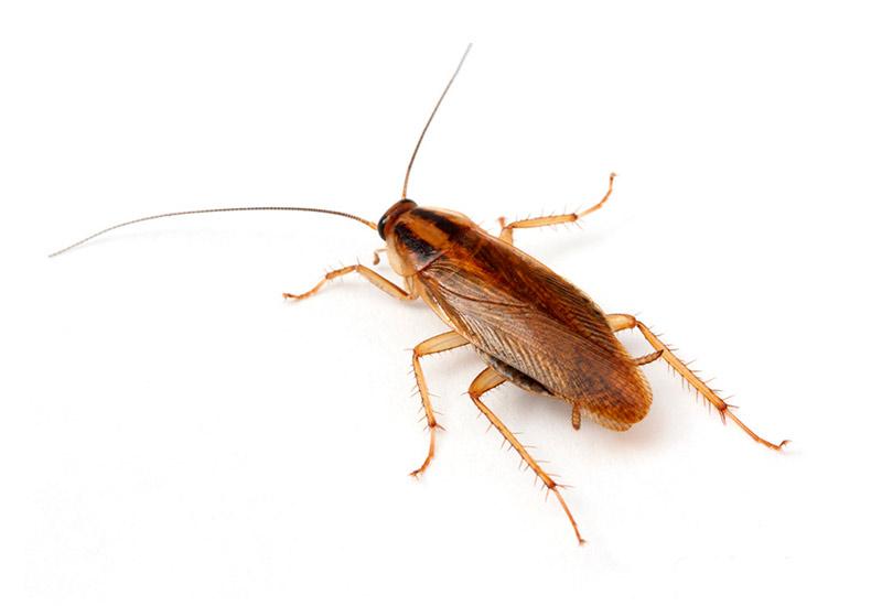 tecno-cucaracha-alemana