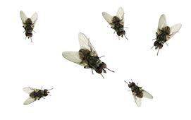 tecno-moscas-small