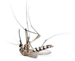 tecno-mosquito-muerto