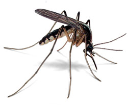 tecno-mosquito-small