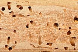tecno-termitas-agujeros