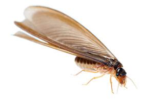 tecno-termitas-small